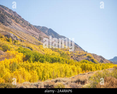 Fall Colors Bishop California Stock Photo
