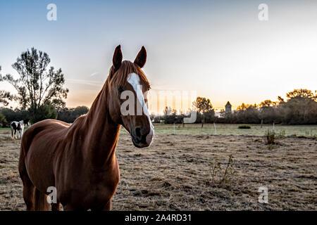 Pferde auf der Koppel - Stock Photo