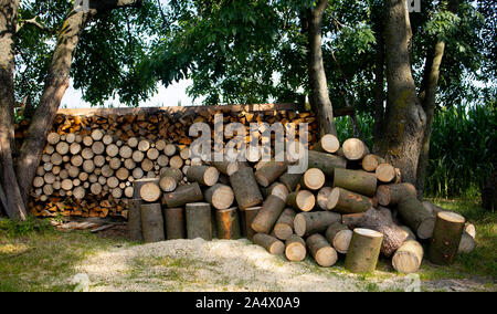 pile of logs in forest - Stock Photo