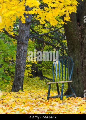 Green chair is sitting beside a tree outdoors surrounded by yellow maple tree leaves. - Stock Photo