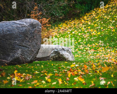 Yellow maple tree leaves covering green grass with boulders in foreground