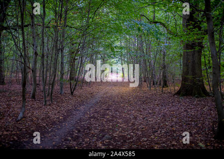 Autumn foliage tunnel. Taken at the end of a early autumn day in a forest located in a suburban town near Paris, France - Stock Photo