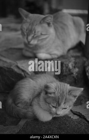 Kitten and cat sleeping on stone steps on the street, black and  - Stock Photo