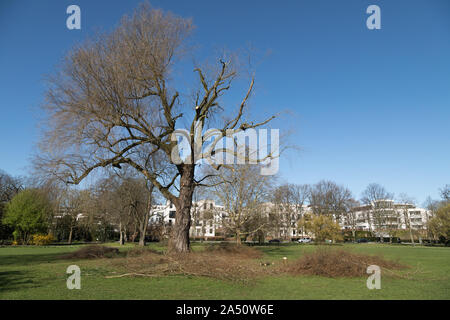 tree pruning in public park in Hamburg - Stock Photo