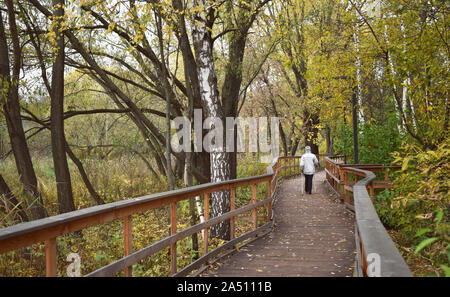 Elderly woman walking in the park. Wooden bridge and flooring with railing. Autumn sunny weather, yellow birch leaves forest. Active old age Nordic - Stock Photo