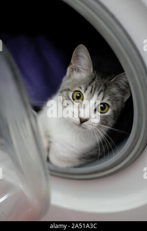 Lovely white and grey cat resting inside a washing machine - Stock Photo