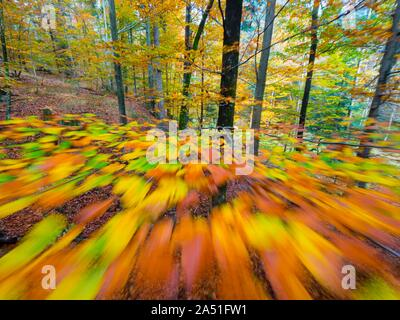 Vivid rich colors of Autumn Fall yearly season in forest near Fuzine in Croatia motion-like intentionally partial-blurry imagery portraying speed - Stock Photo