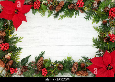 Poinsettia flower background border with holly, mistletoe and winter flora on rustic white wood background. Traditional Thanksgiving theme. - Stock Photo