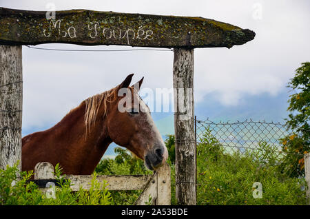 Portrait of wild horse in the field, on a wooden door with inscription in indigenous language ¨Ma Poupee¨ - Stock Photo
