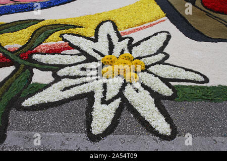 flower petals, grains, rice, beans and seeds close up making a flower pattern in Castelraimondo's flower festival celebrating Corpus Christi in Italy - Stock Photo