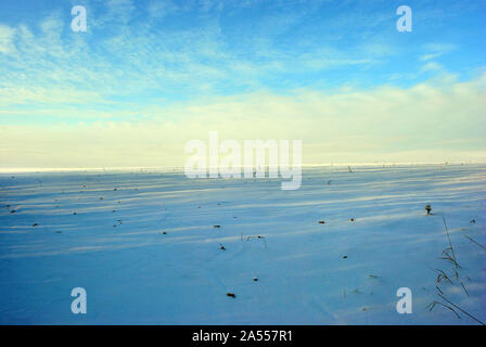 Hills covered with snow, field with sunflower cut stems, winter landscape, bright blue-golden cloudy evening sky - Stock Photo