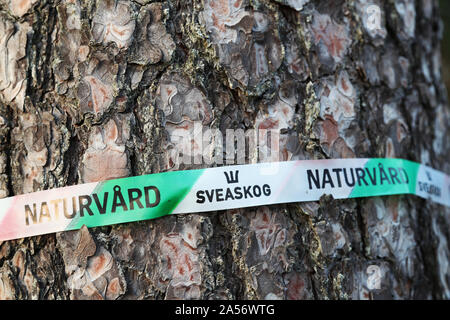 Tape on trees (pine) in a forest, where it says Sveaskog and nature conservation.Photo Jeppe Gustafsson - Stock Photo