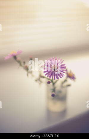 A small bouquet of delicate purple chrysanthemums, flowers on the windowsill - Stock Photo