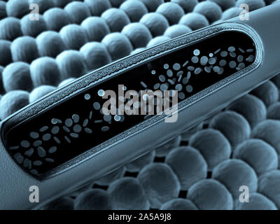 erythrocyte in the blood, inside the blood vessel, High quality 3d render of blood cells, Animation of Red Blood Cells Flowing Through Vein - Stock Photo