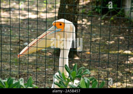 Pelikan/pelican im Zoo Punta Verde in Lignano (Italien) / Tierpark in Lignano / Sehenswürdigkeit in Lignano (Italien) - Stock Photo