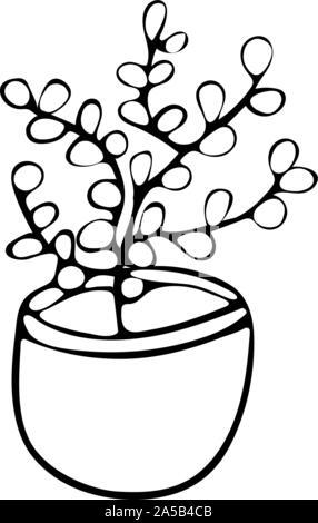 Money Tree, Crassula in pot doodle style black and white. Hand drawn illustration - Stock Photo