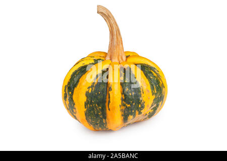 Studio shot of an ornamental gourd cut out against a white background - John Gollop - Stock Photo