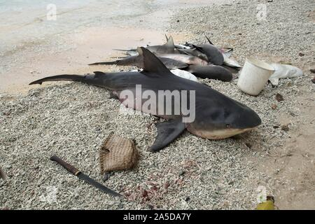 Catch of the Day lying on a Tropical Island Beach ready to be gutted - Stock Photo