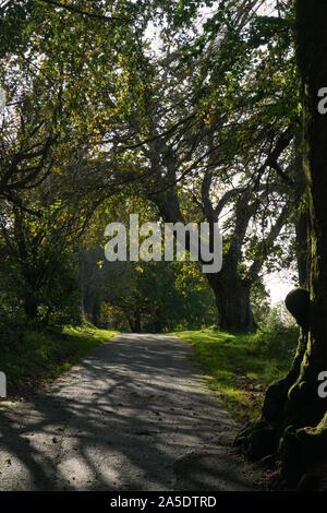 The sun breaking through the trees - Stock Photo