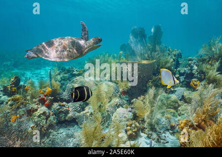 Caribbean coral reef underwater with a green sea turtle and tropical fish, Martinique, Lesser Antilles