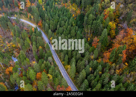 Drone top view over turn road bend in countryside autumn pine forest - Stock Photo