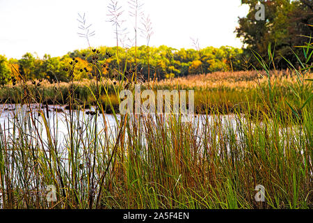 Scenic image in fall season of small pond surrounded by tall grasses - Stock Photo
