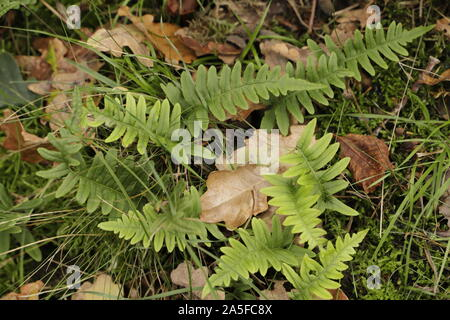 Beautiful green fern in the forest - Stock Photo