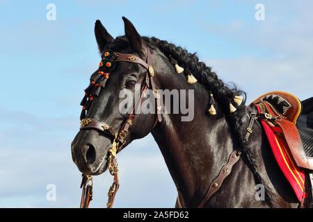 Andalusian saddle black horse portrait against sky  background - Stock Photo