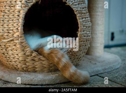 ginger tabby cat sleeping outside in a wicker pod - Stock Photo