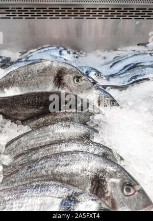Sea bream Sparus aurata on ice at the seafood booth. Dorada fish or gilt-head bream on ice background sale in supermarket - Stock Photo