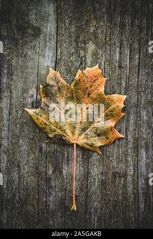 Single autumn leaf over wooden backgound - Stock Photo