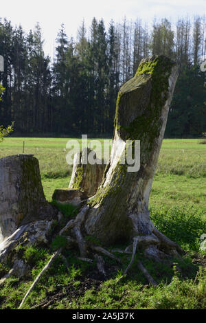 moss covered old tree trunk in meadow, old tree stump on grass - Stock Photo