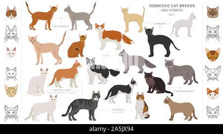 Domestic cat breeds and hybrids collection isolated on white. Flat style set. Different color and country of origin. Vector illustration - Stock Photo