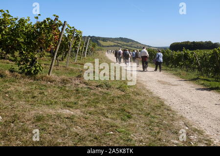 Visitors on wine tour in English vineyard - Stock Photo
