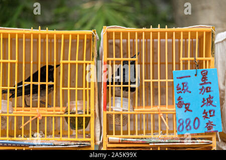 Chinese songbirds in traditional bamboo cages on sale at the Yuen Po Street Bird Garden in Mong Kok, Kowloon, Hong Kong. - Stock Photo