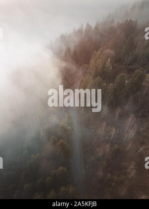 Foggy Forrest - Stock Photo