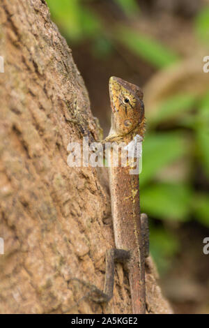 Wild animal in Thailand - Stock Photo