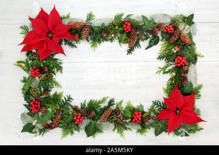 Poinsettia flower background border with holly, mistletoe and winter flora on rustic white wood background. Traditional Thanksgiving or Xmas theme. - Stock Photo