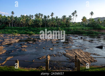 Pinnawala/ Sri Lanka: AUGUST 03- 2019: The village of Pinnawala. Here is a nursery and captive breeding ground for wild Asian elephants located at Pin - Stock Photo