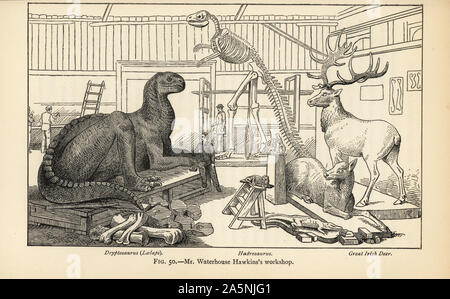 Benjamin Waterhouse Hawkins' workshop of dinosaur models. Reconstructions of a Dryptosaurus aquilunguis, Hadrosaurus foulkii and Great Irish Deer, Megaloceros giganteus. Engraving after an illustration by Joseph Smit from Henry Neville Hutchinson's Creatures of Other Days, Popular Studies in Palaeontology, Chapman and Hall, London, 1896. - Stock Photo