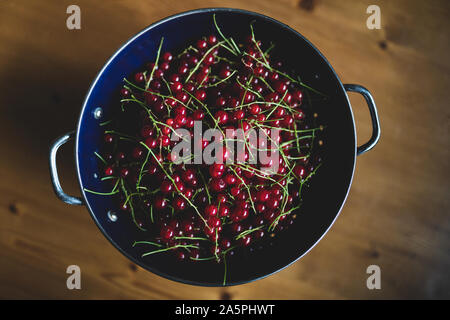 red currants in a blue colander on a wooden table. Ripe red currant berries. Close up view