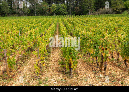 Autumn in the vineyards of Nuits Saint Georges, Burgundy, France.