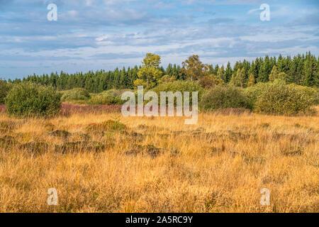Landschaft im Naturpark Hohes Venn, Lüttich, Belgien    | The High Fens nature reserve, Liege, Belgium - Stock Photo
