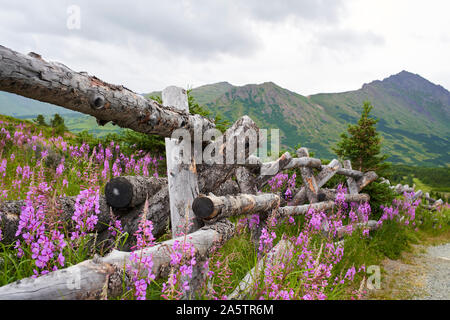 Alaskan mountains with fireweed in bloom - Stock Photo