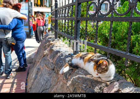 A calico cat sleeps on a rocky gated wall as tourists enjoy a sunny day in the Galata district of Istanbul, Turkey - Stock Photo