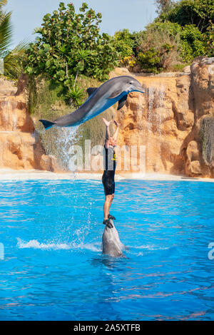 Show with a trainer and dolphins in the pool at the Loro Park (Loro Parque). Puerto de la Cruz, Tenerife, Spain - Stock Photo