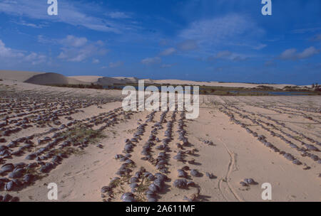 Brazil: The sand dunes of Baleia Ze do Lago near Icarai in Maranhao - Stock Photo