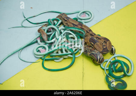 Green feather snakes. A snake with a gray spit . artificial and real snakes on a yellow background . - Stock Photo