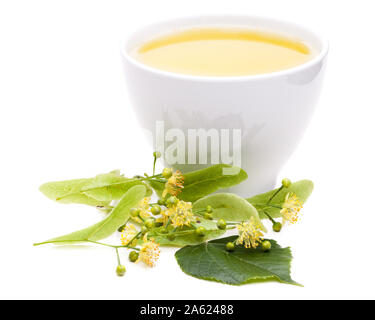 lime blossom tea with fresh flowers on white background - Stock Photo