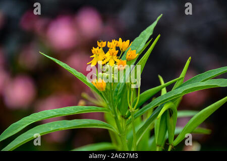 Blumen im blühenden Barock zur Kürbisausstellung / Herbstblumen / Herbstdekoration / Flowers in blooming Baroque for pumpkin exhibition / autumn flowe - Stock Photo